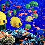 32 The Great Barrier Reef, Australia
