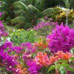 35 Martinique, Caribbean