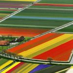 7 Blooming tulip fields in the Netherlands