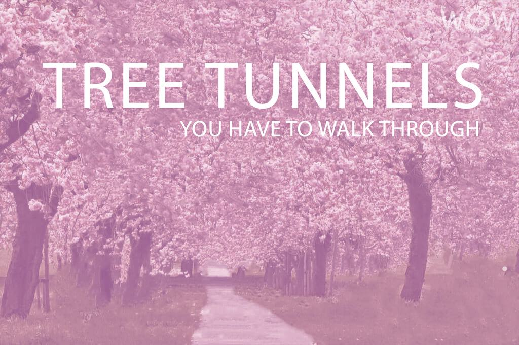 15 Tree Tunnels You Have To Walk Through
