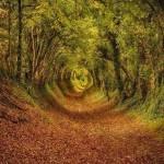 Ashdown Forest, West Sussex