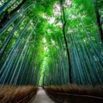 Bamboo Path, Japan - by Alex Chen - wkc.1 :Flickr