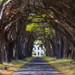 Cypress Tunnel, Point Reyes - by Joe Parks/Flickr