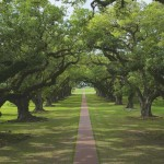 Oak Alley along the Mississippi River outside New Orleans, Louisiana - by David C Follow MisterDavidC:Flickr