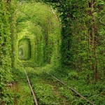 Tunnel of Love, Ukraine - by Kashif Pathan - furiouskaa5786:Flickr