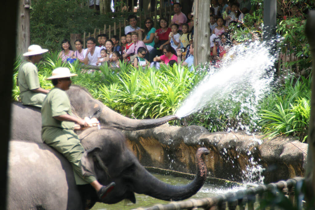 Singapore Zoo - by Rob Chabdler:Flickr