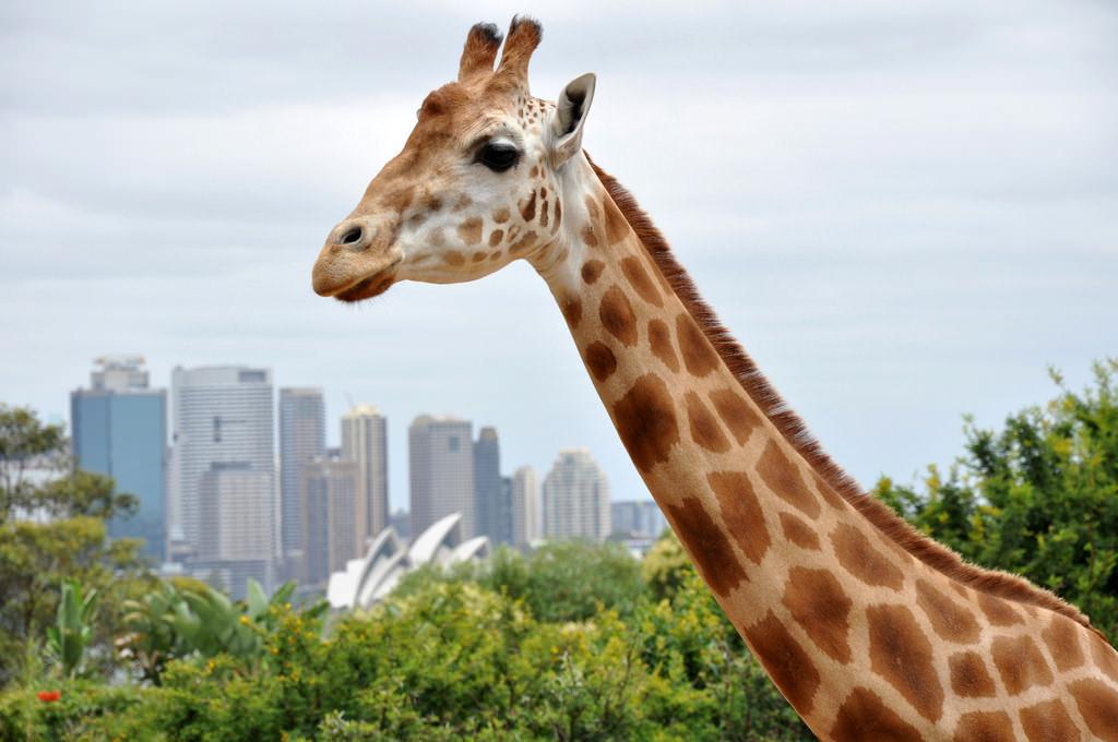 Taronga Zoo, Sydney - by Tom Reynolds:Flickr