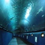 Kelly Tarlton's Sea Life Aquarium, Auckland - by PinballRobin:Flickr