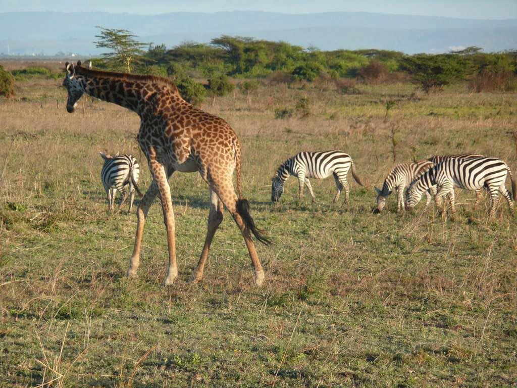 Nairobi National Park, Kenya - by AnnaKika:Flickr