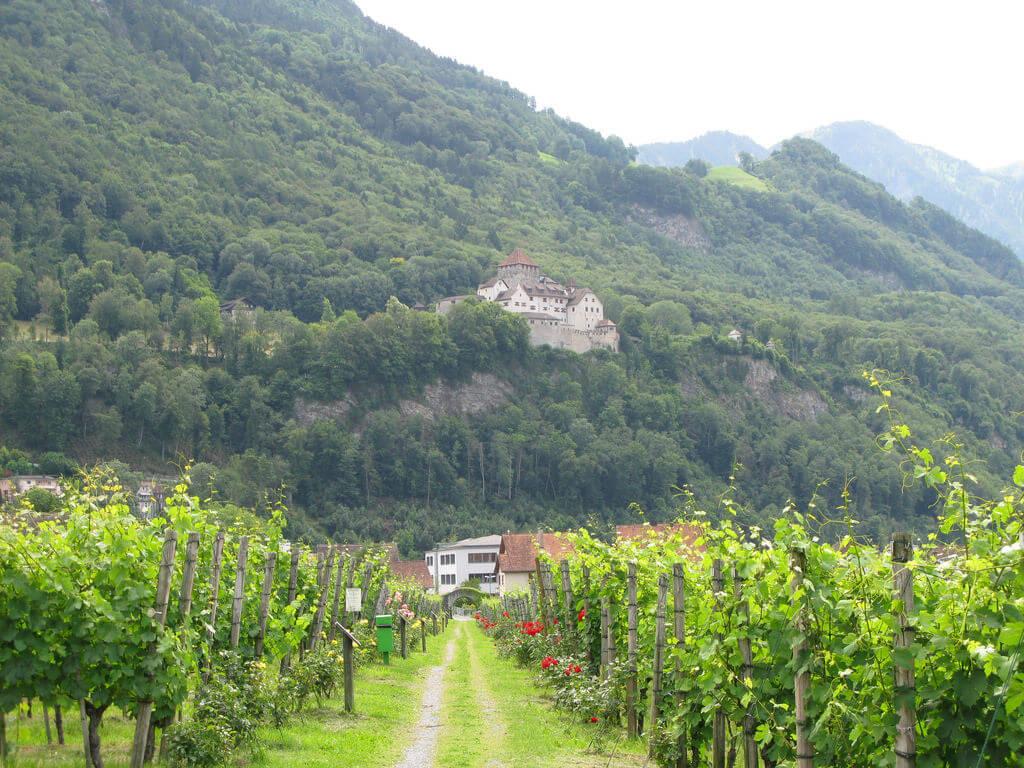 Prince of Liechtenstein Vineyards, Vaduz - by cdschock:Flickr