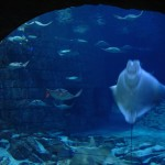 SeaWorld Orlando - by Jeremy Thompson - Roller Coaster Philosophy:Flickr