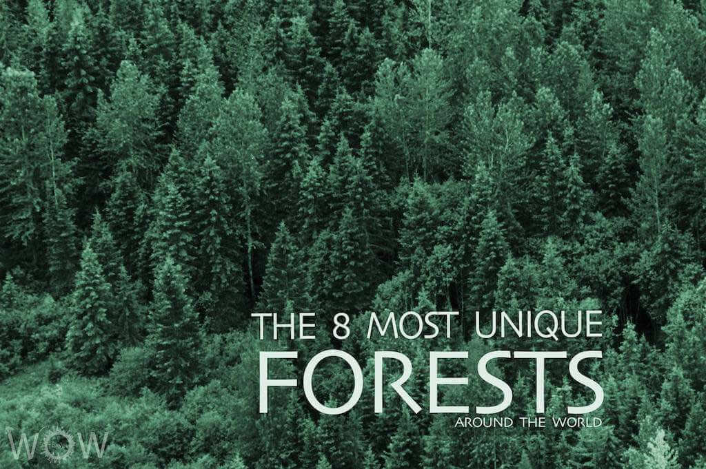 The 8 Most Unique Forests Around The World