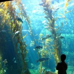 Birch Aquarium, San Diego - by Falashad :Flickr