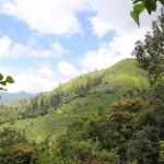 Blue Mountains, Jamaica - by Shiv - Shivonne Du Barry:Flickr