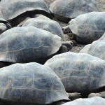 El Chato Tortoise Reserve, Galapagos - by Richard St. John - richardstjohn10:Flickr