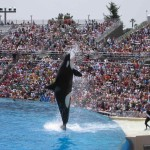 SeaWorld, San Diego - by Jamie Lantzy - jlantzy:Flickr