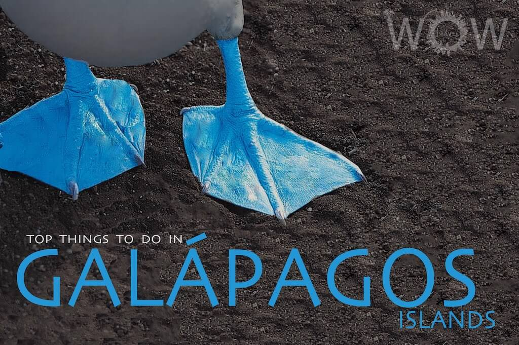 Top 10 Things To Do In Galápagos Islands