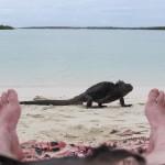 Tortuga Bay, Galapagos - by Mikko Koponen - mtkopone:Flickr