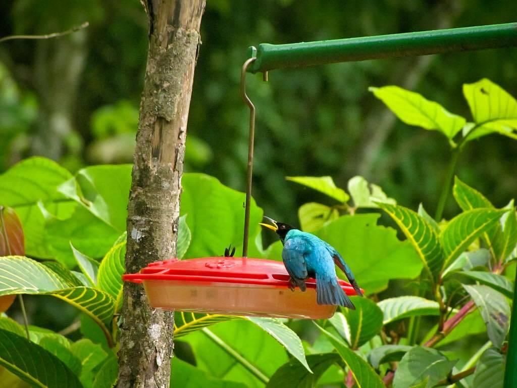 Asa Wright Nature Centre, Trinidad - by Shriram Rajagopalan - shri_ram_r:Flickr