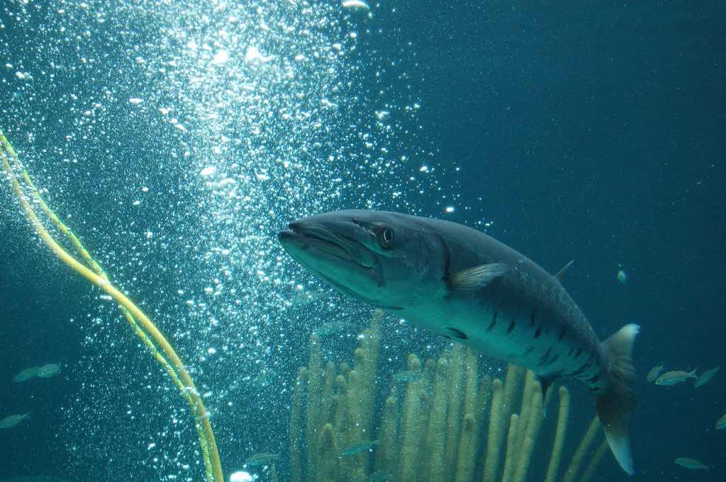 Bermuda Aquarium, Natural History Museum & Zoo - by Konrad Glogowski - teachandlearn/Flickr