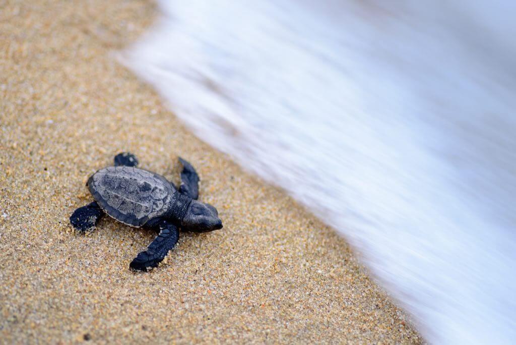 Galibi Nature Reserve, Suriname - by Roehan Rengadurai:Flickr