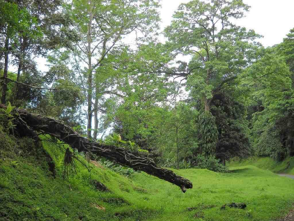 Main Ridge Forest Reserve, Tobago - by tobagojo:Panoramio