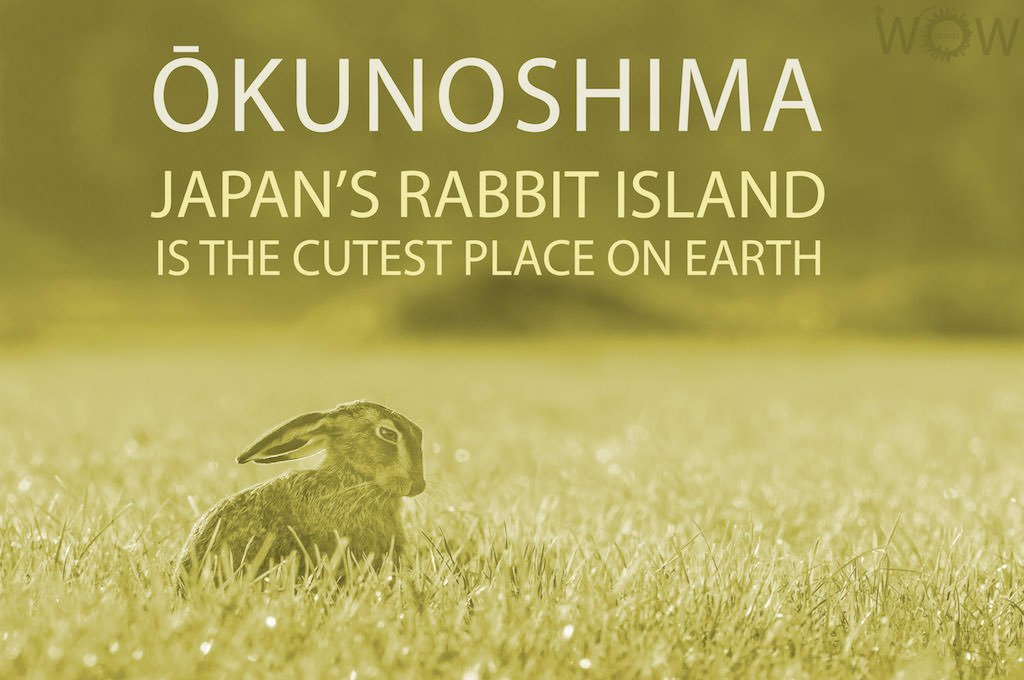 Japan's Rabbit Island Is The Cutest Place On Earth