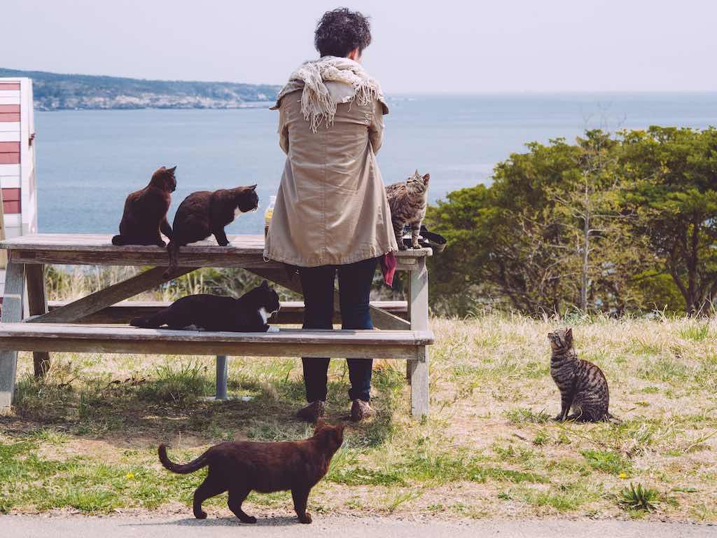 Tashirojima Island, Japan - by annintofu/Flickr