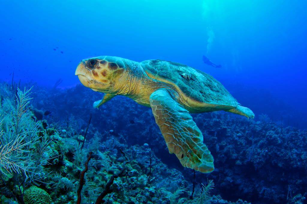 Cayman Turtle Farm, Cayman Islands