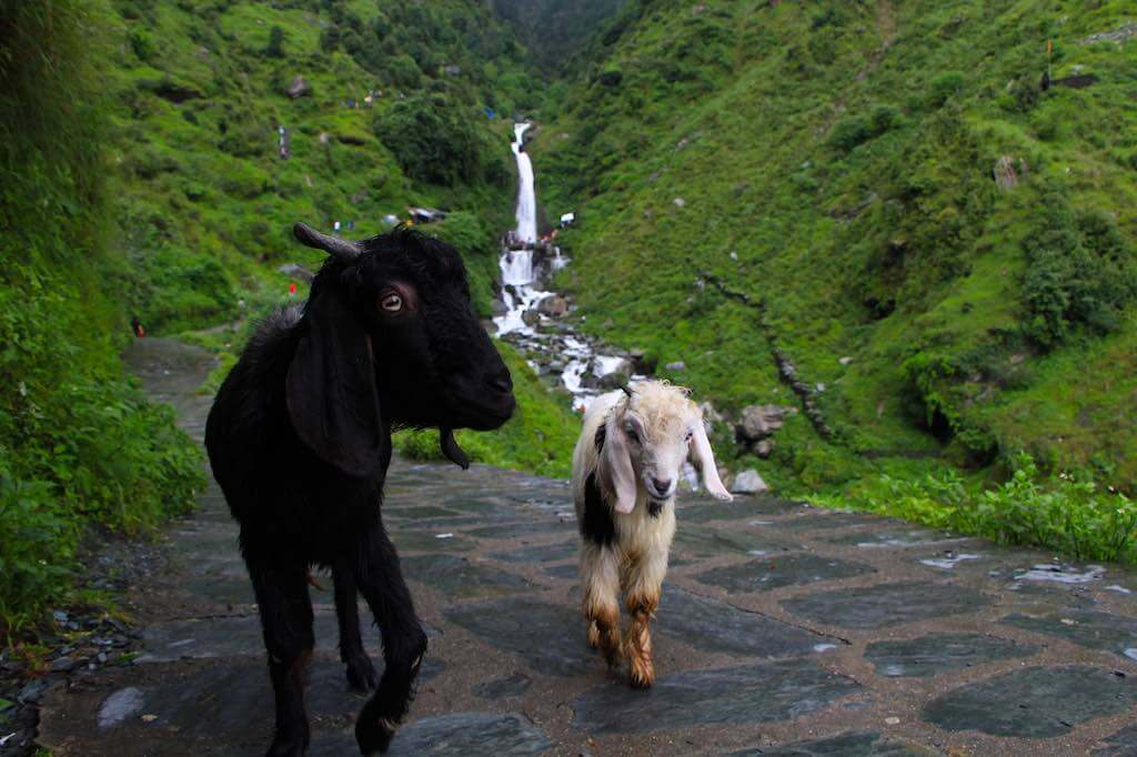 Bhagsu Waterfall, Dharamsala - by WOW Travel