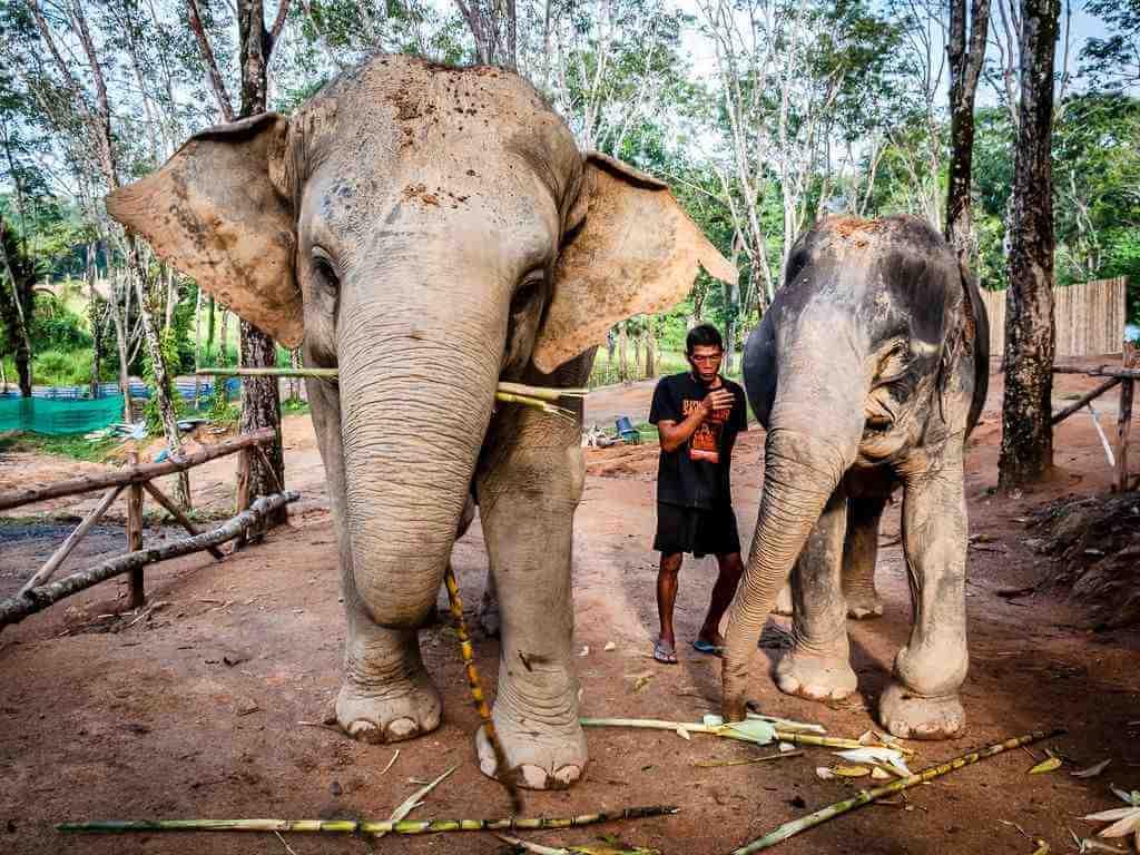 Phuket Elephant Sanctuary by Tobias Scheck / Flickr.com