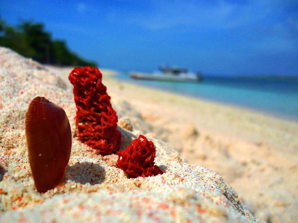Pink Beach, Great Santa Cruz Island - by Wowzamboangacity / Wikimedia Commons