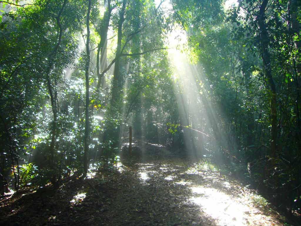Udawattakele Sanctuary, Kandy - by Nyanatusita / Wikimedia Commons