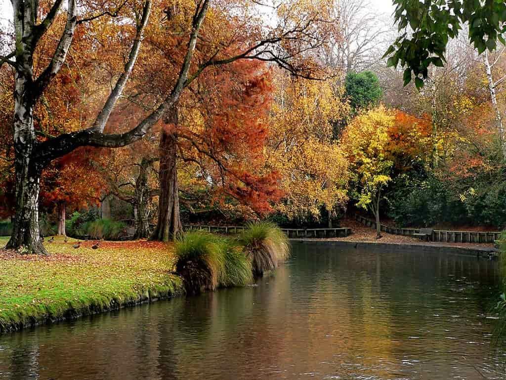 Hagley Park - by Bernard Spragg
