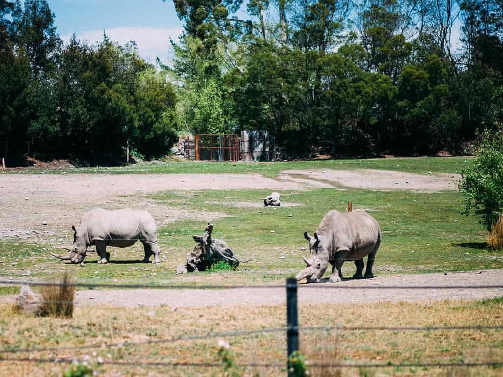 Orana Wildlife Park - by Ezra Paulekas/flickr