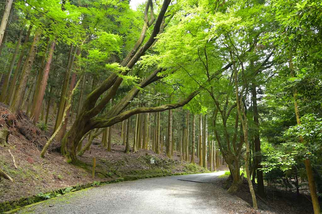 Kasugayama Primeval Forest, Nara - Shutterstock.com