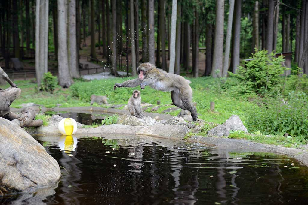 Monkey Mountain, Villach - by Region Villach / Flickr.com
