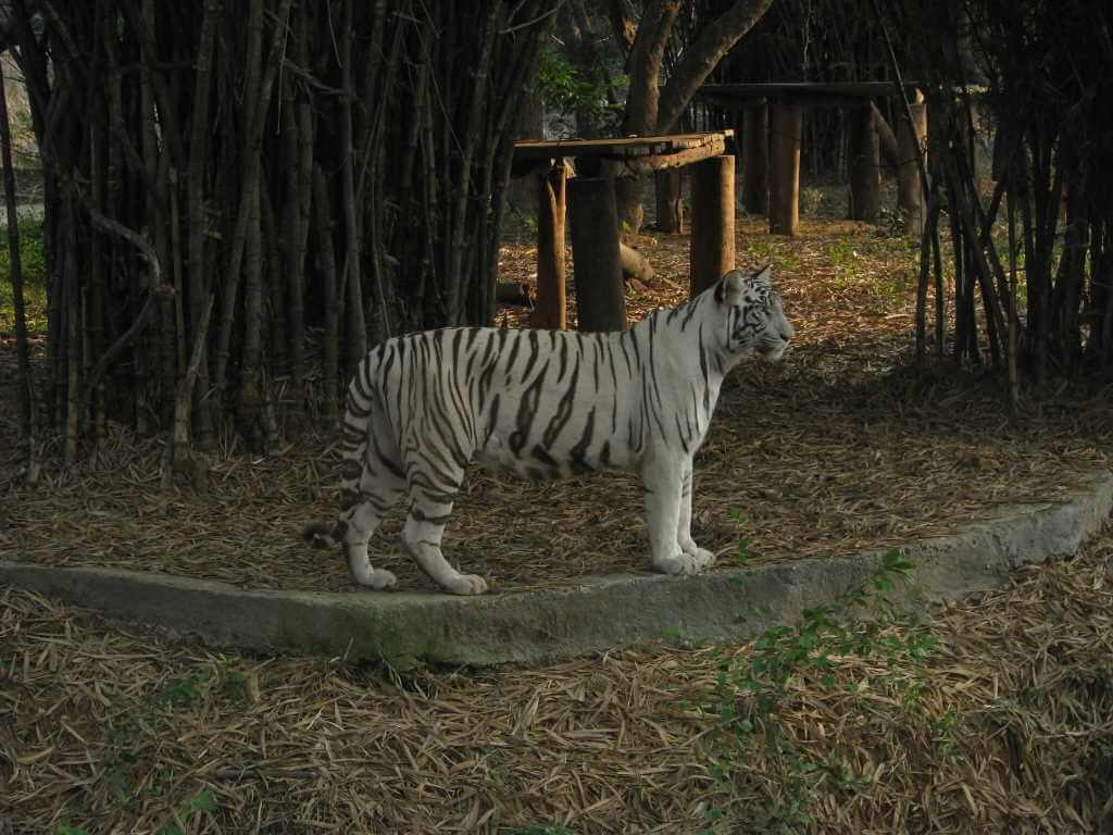 Arignar Anna zoological Park, Chennai by Suresh Naganathan/Wikimedia Commons
