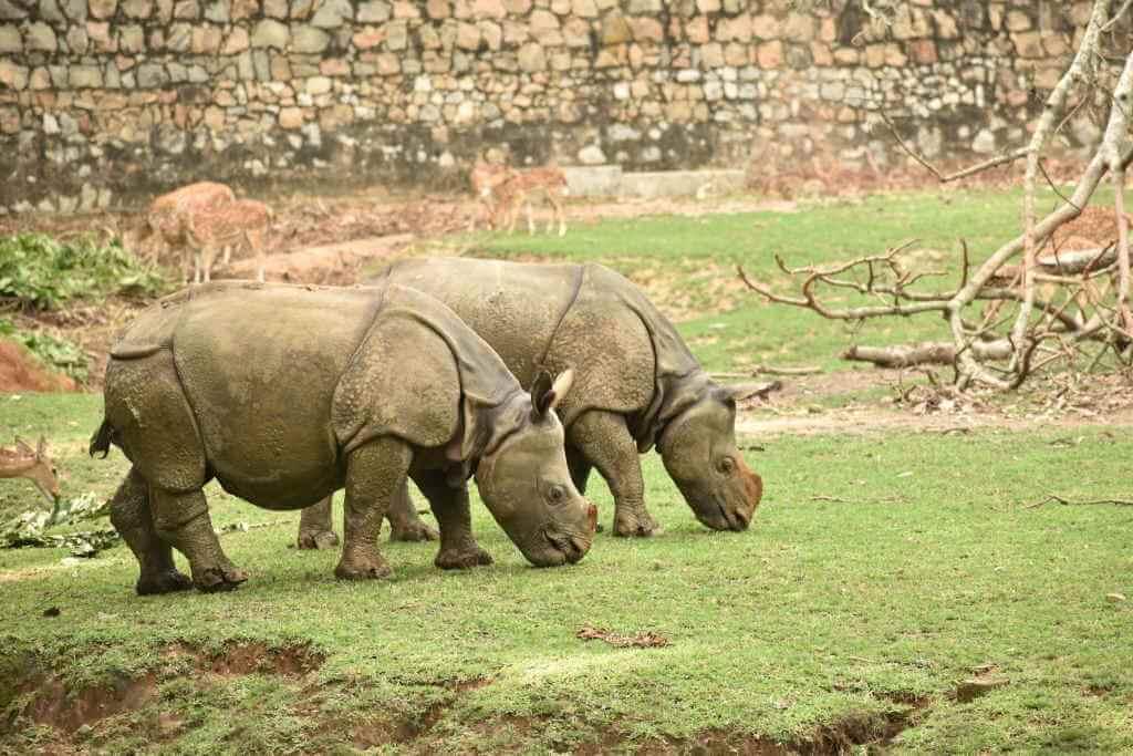 Assam Zoo_SdPhotography/Shutterstock