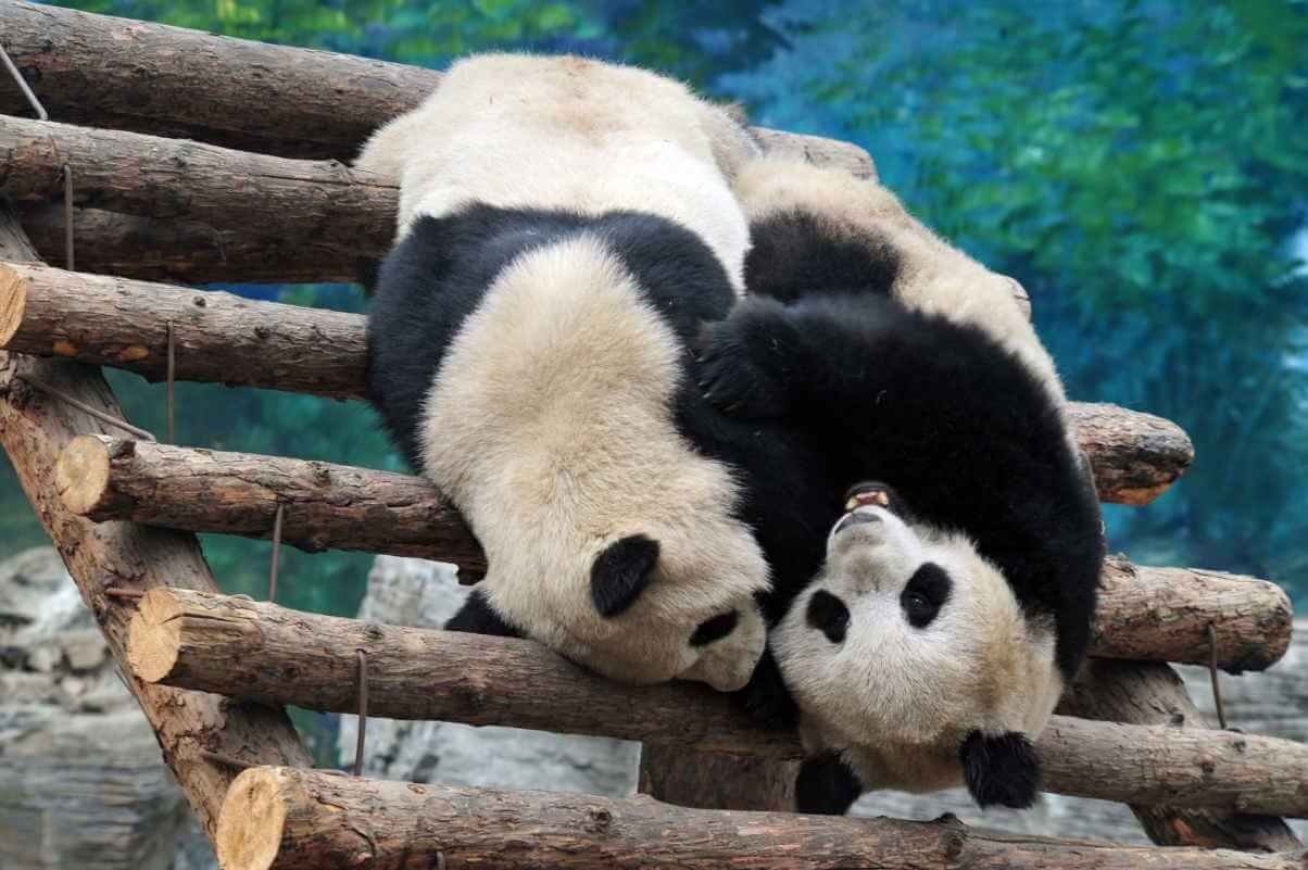 Beijing Zoo_Chameleonseye/Shutterstock