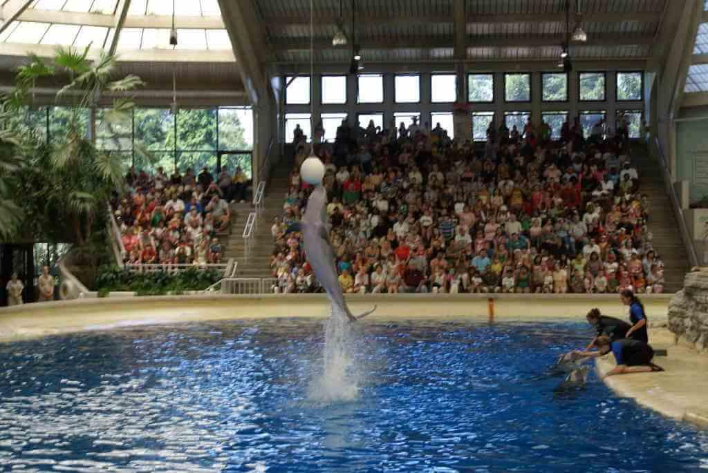 Brookfield Zoo_Nimesh Madhavan/Wikimedia Commons