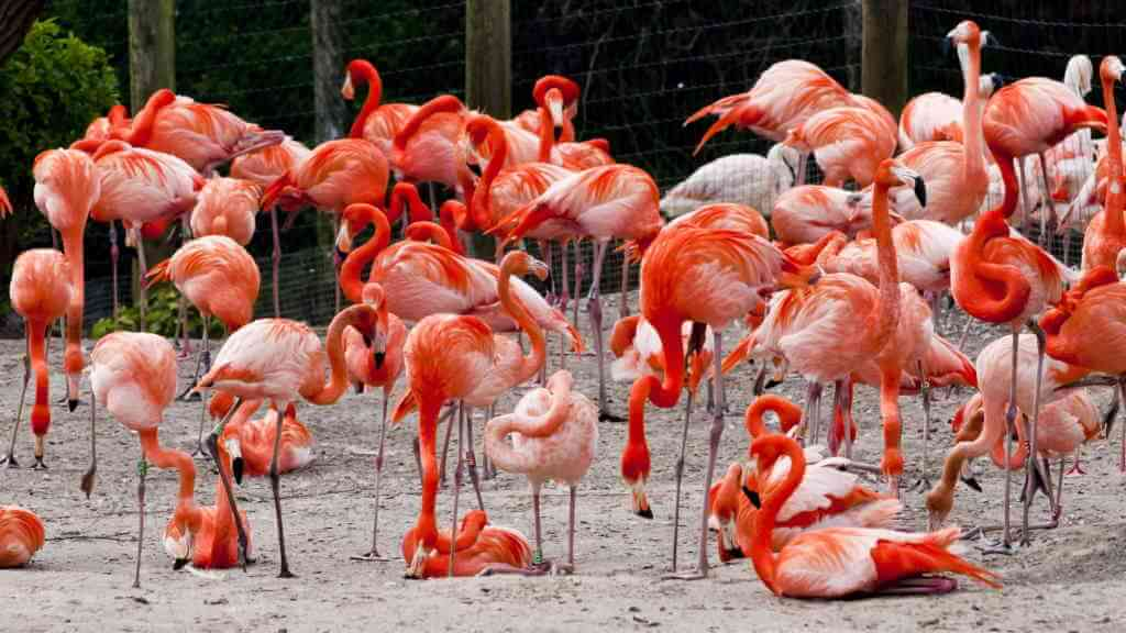 Chester Zoo_Brian Maudsley/Shutterstock