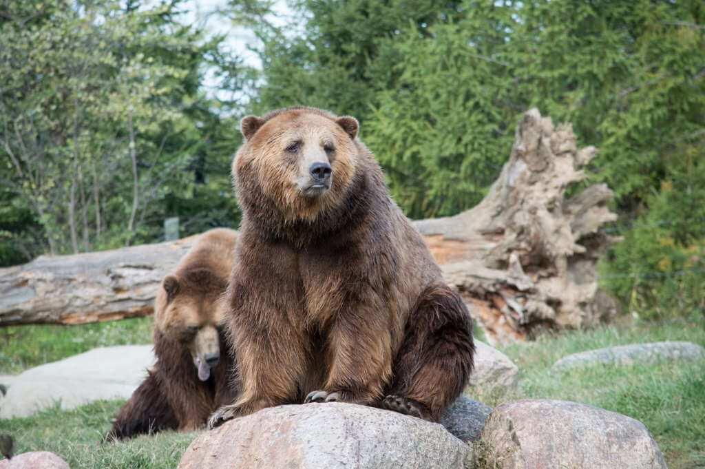 Columbus Zoo by AshleyKirkPatrick/Shutterstock