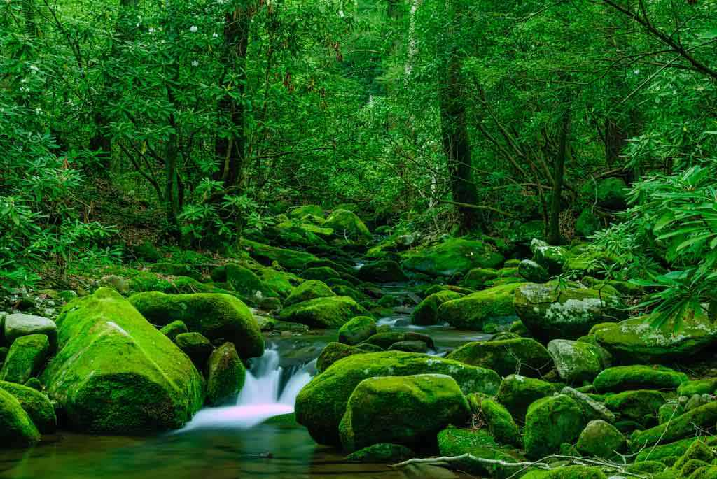 Cosby Creek, Great Smoky Mountains National Park, Tennessee