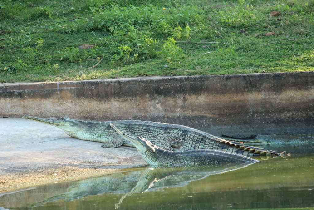 Indira Gandhi Zoological Park, Visakhapatnam by bdmshiva/Wikimedia Commons