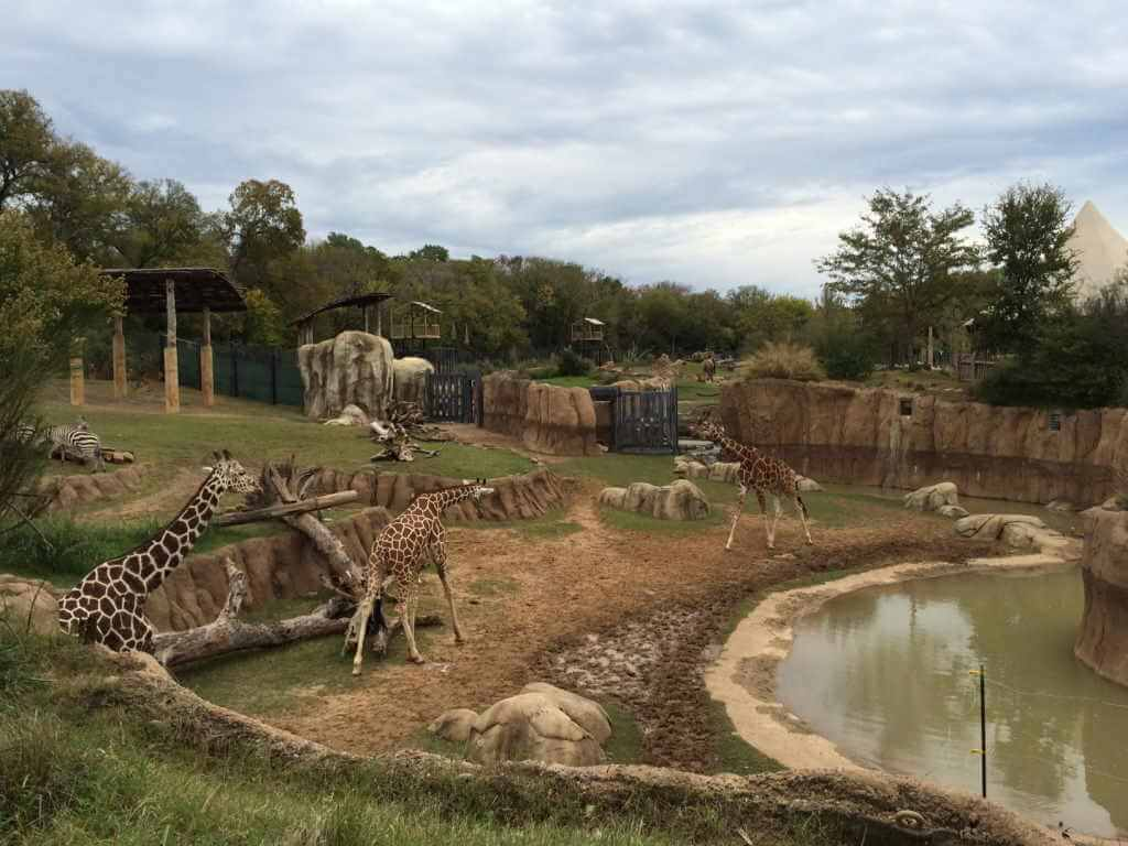 Jamnagar to have world's one of the largest, about 300 acre size Zoo