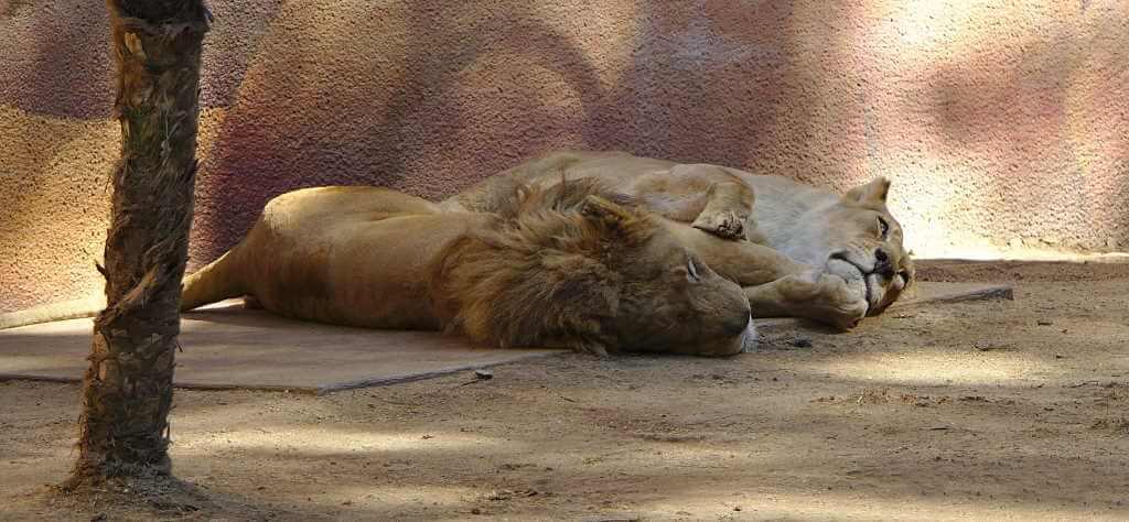 Los Angeles Zoo by John Salatas/Wikimedia Commons