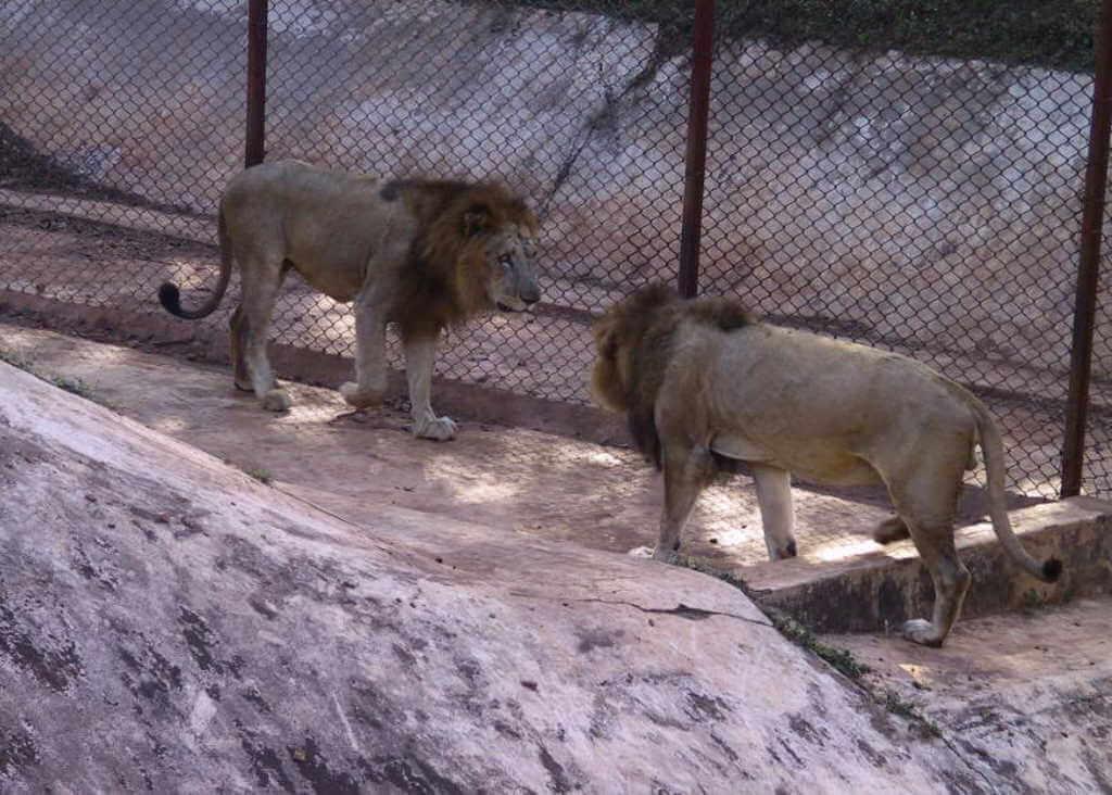 Nandankanan Zoo, Odisha by Dreamodisha/Wikimedia Commons