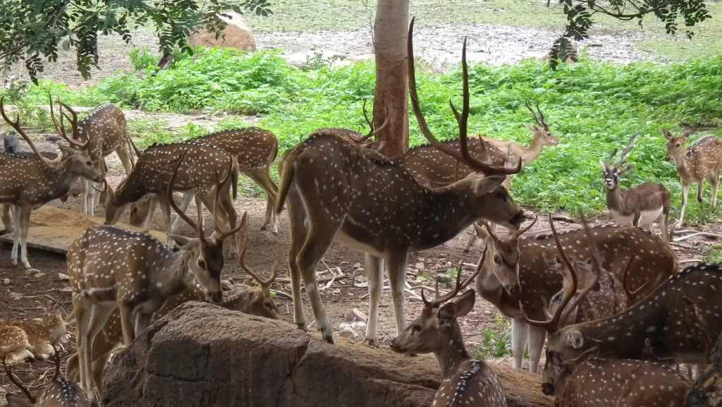 Nehru Zoological Park Hydrabad_Rameshng/Wikimedia Commons