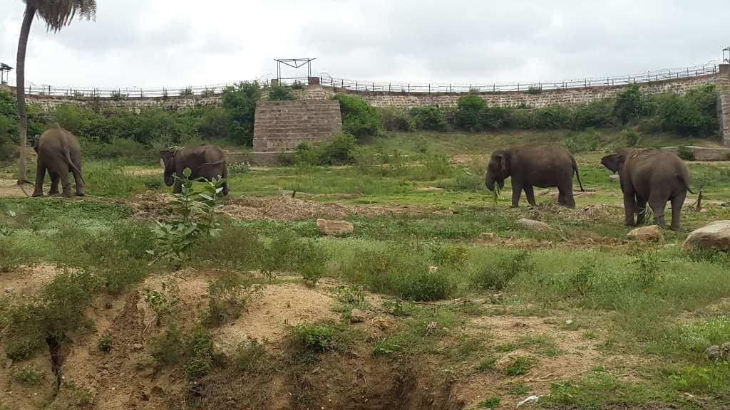 Nehru Zoological Park Hydrabad_ravirajP/Wikimedia Commons